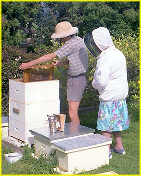 Grandma looking at bees