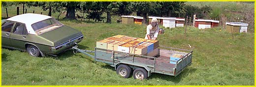 Boxes of honey